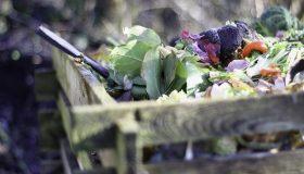 image déchets végétaux